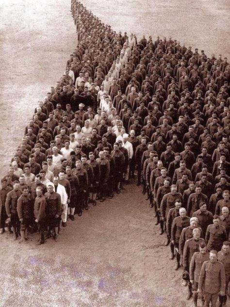 army horse tribute